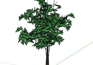 某室外园林植物SU(草图大师)模型合集