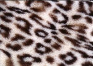 100张3DMAX动物纹地毯材质