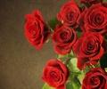花束,花卉,特写
