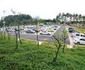 停车场,植物,汽车