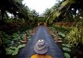 木桥,水池,灯具,植物