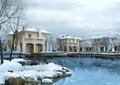 別墅景觀,雪景,植物