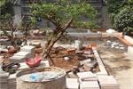 磐基景观--山水草堂73号庭院景观工程