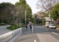 街道,道路,街道景观,围栏,树池,路灯