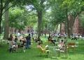 公共綠地,休閑綠地,椅子