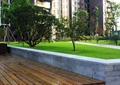 木平台,花坛,植物