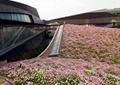 采光井,花卉,住宅景观