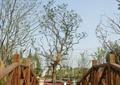 圆拱桥,树池,植物,护栏