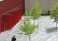 树池,植物,地面铺装,墙体立面