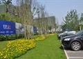 草坪景觀,花卉植物,落葉植物,停車場
