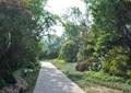 园路景观,地面铺装,庭院灯,花卉植物,灌木植物,常绿乔木