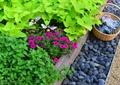 花卉,绿植,鹅卵石,景观植物