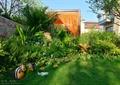 草坪,松树,景观小品,景观植物,凉亭