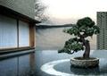 庭院景观,卵石水池,松树盆景