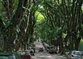 林荫道路,指示牌,常绿大乔木,汽车