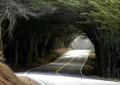 林荫大道,道路,常绿大乔木