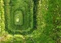 林荫火车轨道景观,常绿藤蔓植物