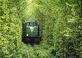 林荫轨道景观,火车,常绿小乔木