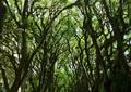 林荫道景观,道路,汽车,常绿大乔木,路灯
