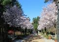 道路景观,座椅,盆栽,景观树