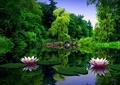 荷花塘,園橋,景觀植物,水生植物