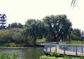 栈道桥,栏杆,水景,大乔木