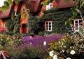 乡村住宅,乡村景观,花园景观