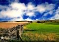 乡间田野,绿地景观,乡村景观