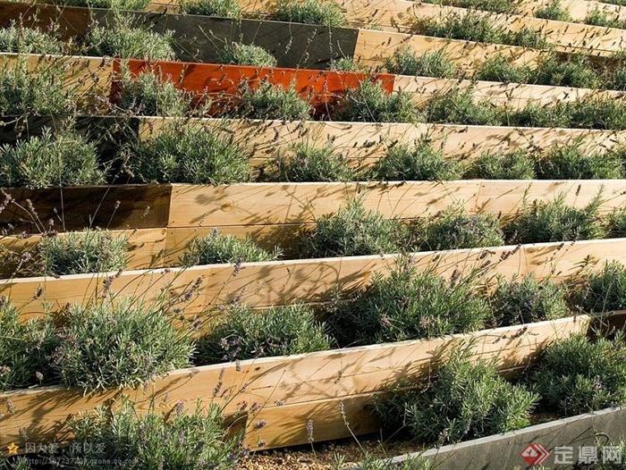 草本植物,挡墙