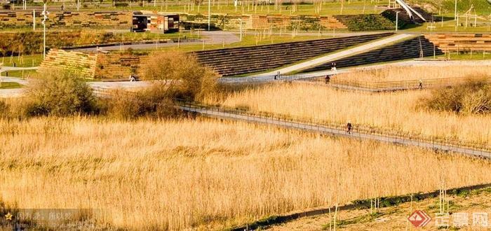 观赏草,园路,栏杆,植物