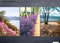 花卉植物,栈道,乔木,地面铺装,栏杆