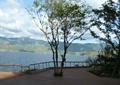 栈道,平台,地面铺装,树池,乔木,栏杆,水景