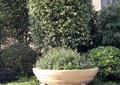 花缽,灌木,盆景,植物造景