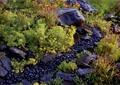 卵石水沟,景石,地被植物
