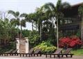 休閑椅,常綠喬木,花卉植物,灌木植物