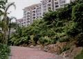 园路景观,地面铺装,常绿乔木,灌木植物
