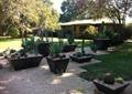 盆栽,盆景,草坪,花园景观