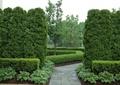 灌木带,常绿乔木,石材铺装